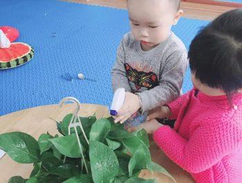 Cô giáo giới thiệu về tác dụng của cây xanh ở quanh ta